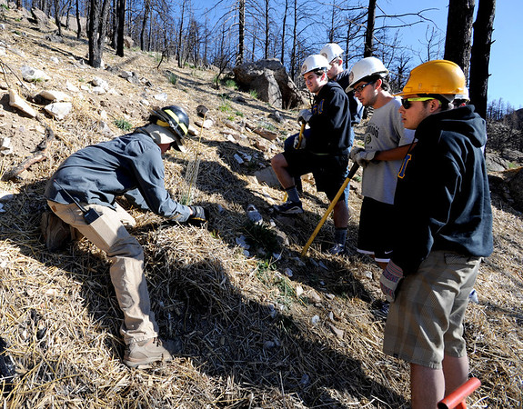 "Team leader, Radford Dubois, left, shows a group of volunteers from CU, Mike Heffler, left, Ian Solow-Niederman, and Seth Crane, and  how to plant news trees.<br /> The Boulder County Bar Association organized a tree planting effort on Saturday in the area burned by the Fourmile Fire.<br /> For more photos and a video of the tree planting, go to  <a href=""http://www.dailycamera.com"">http://www.dailycamera.com</a>.<br /> Cliff Grassmick / April 21, 2012"