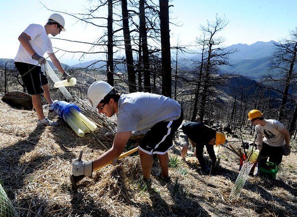 "Ian Solow-Niederman, center, joins other CU students from Alpha Epsilon Pi fraternity planting trees.<br /> The Boulder County Bar Association organized a tree planting effort on Saturday in the area burned by the Fourmile Fire.<br /> For more photos and a video of the tree planting, go to  <a href=""http://www.dailycamera.com"">http://www.dailycamera.com</a>.<br /> Cliff Grassmick / April 21, 2012"