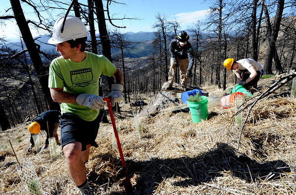 "Mike Heffler, left, digs holes for trees with others from CU.<br /> The Boulder County Bar Association organized a tree planting effort on Saturday in the area burned by the Fourmile Fire.<br /> For more photos and a video of the tree planting, go to  <a href=""http://www.dailycamera.com"">http://www.dailycamera.com</a>.<br /> Cliff Grassmick / April 21, 2012"