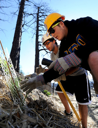 "Ian Solow-Niederman, left, and Seth Crane, both CU students, plant new trees.<br /> The Boulder County Bar Association organized a tree planting effort on Saturday in the area burned by the Fourmile Fire.<br /> For more photos and a video of the tree planting, go to  <a href=""http://www.dailycamera.com"">http://www.dailycamera.com</a>.<br /> Cliff Grassmick / April 21, 2012"