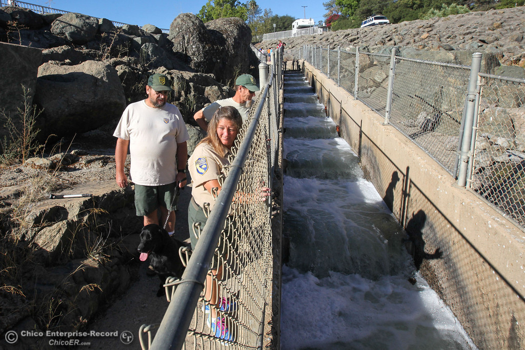 . Donna Merrill, Steve Brightwell, and Bob Grey (front to back) of the Department of Fish and Wildlife, await the first fish to climb the recently opened fish ladder in Oroville on Monday, September 16, 2013. Salmon and Steelhead will make their way from the diversion dam into the fish hatchery to spawn. (Frank Rebelo/Staff Photo)