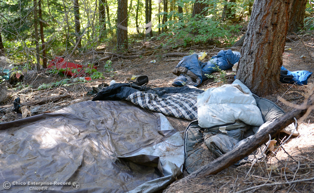 . Sleeping bags and tarps were found in this area where it is believed two suspects were busy trimming buds as several members of a multi agency Special Enforcement Unit eradicated nearly 7,300 marijuana plants from a remote area in Upper Concow Thursday, Aug. 15, 2013. Two suspects were arrested in the marijuana garden. (Bill Husa/Staff Photo)