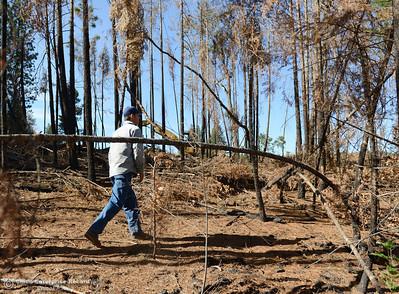 Panther Timber Harvest