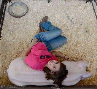 "Maddy Miller of Magalia lies with her pig ""Up"" which she said stands for ""Ugly Pig"" as the Silver Dollar Fair begins to get set up and underway Tuesday, May 20, 2014. (Bill Husa - Enterprise-Record)"