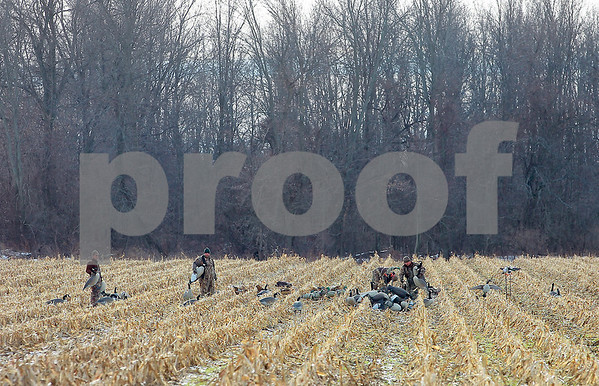 Spencer Tulis/Finger Lakes Times Four goose hunters place decoys in a cornfield on Lake to Lake Road west of Geneva saturday.
