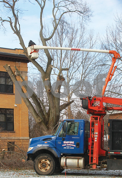 Spencer Tulis/Finger Lakes Times It is hard to imagine how many years the tree pictured has stood in fron of the Lincoln School in Newark as a crew from Empire Tree Surgeons were in the process of cutting it down Saturday.
