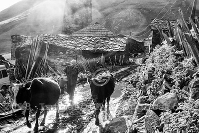 A woman tends to cows in the village of Ushguli in Svaneti, Georgia, part of a recognized UNESCO World Heritage Site. Located at an altitude of 2,100 meters near the foot of Shkhara, one of the highest summits of the Greater Caucasus mountains, Ushguli is one of the highest continuously inhabited settlements in Europe. It is home to 70 families and covered in snow for 6 months of the year. Often the road to Mestia is impassable. Ushguli shares the Svaneti region traditional koshki, defensive stone structures built from the 9th century onward and is known for it's architectural treasures and picturesque landscapes.