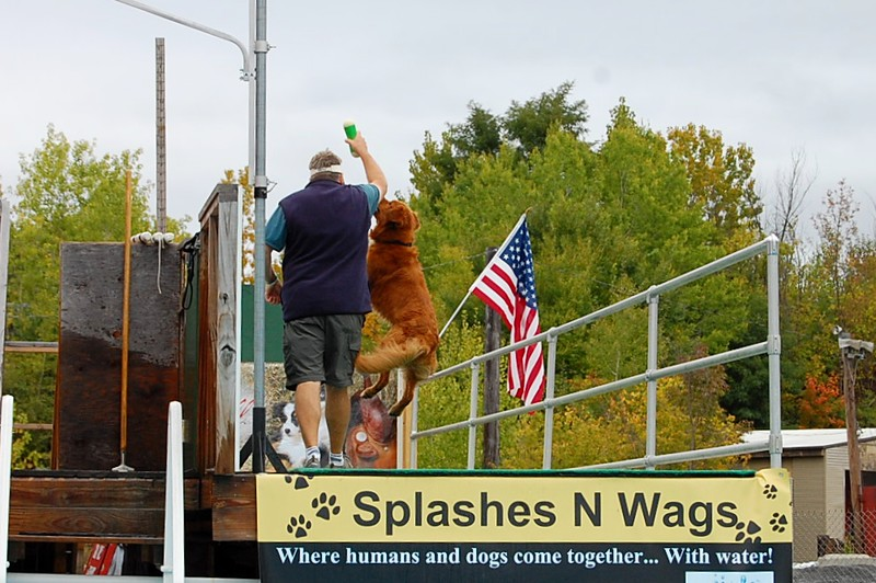 . Baxter the golden retriever jumps up to get his bumper from his handler at the Green Mountain DockDogs event in Bennington on Sunday.  All photos by Makayla-Courtney McGeeney - Bennington Banner