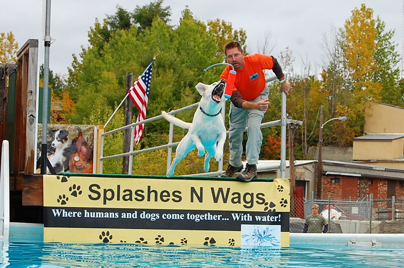 . A yellow lab strives to get his bumper in the Big Air division of the Green Mountain DockDogs event on Sunday.  All photos by Makayla McGeeney - Bennington Banner