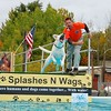 A yellow lab strives to get his bumper in the Big Air division of the Green Mountain DockDogs event on Sunday. <br /> All photos by Makayla McGeeney - Bennington Banner