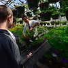 KRISTOPHER RADDER - BRATTLEBORO REFORMER<br /> John Mitchell, the horticulture teacher at Keene High School, shows Keegan Pratt and Johnathan Deraps, freshmen from Winchester, N.H., how to properly pluck a flower on Tuesday, May 1, 2018.