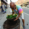 KRISTOPHER RADDER - BRATTLEBORO REFORMER<br /> Dick DeGray, of Brattleboro, transplants various flowers into potters around Brattleboro's Main Street to bring a little beauty to the downtown area on Tuesday, May 8, 2018.