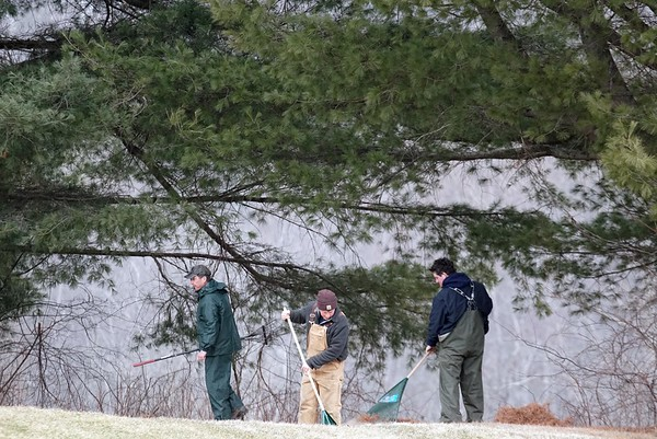 BEN GARVER — THE BERKSHIRE EAGLE<br /> Joe Powers, Brian Callahan and Ben Sohr rake needles from under a white pine on the Golf course at the Country Club of Pittsfield.