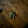 KRISTOPHER RADDER — BRATTLEBORO REFORMER<br /> A hemp leaf that fell off one of the plants.