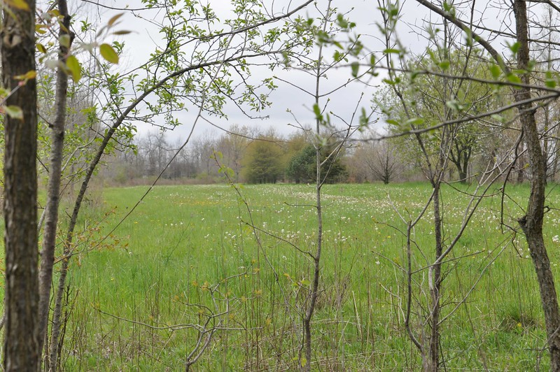 ASHLEY FOX / GAZETTE The Cuchnas don't have kids and wanted to leave their 20 acres of land so that people could enjoy nature as the area around them slowly begins to build and commercialize.