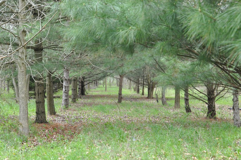 """ASHLEY FOX / GAZETTE The Cuchnas began planting trees with the goal to make """"avenues"""" and rows of trees to stroll under."""