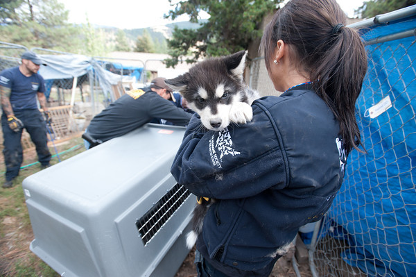 The HSUS Animal Rescue teams assists the Sheriff's Department and the Lewis and Clark Humane Society and in the rescue of dogs from a large-scale breeder near Helena.