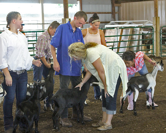 UTILITY JUDGING: Judge Jone Koch, a Shelbyville dairy goat breeder, examined one of the goats at the Boone County 4-H Fair Utility Goat Show Sunday.