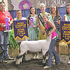 CHAMPION MARKET LAMB: This year's supreme champion market lamb was shown by three-year 4-Her Emma Mitchell.