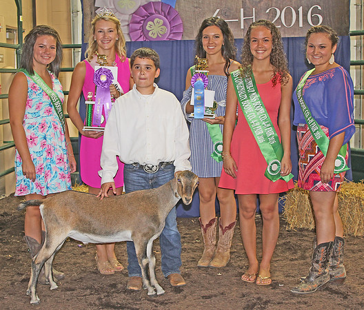 Elizabeth Pearl | The Lebanon Reporter CHAMPION WETHER: Tanner Weakley was the named the grand champion of dairy goat wethers at the Boone County 4-H Fair Dairy Goat Show Monday. The reserve wether champion was Maddie Juilerat.