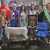 CHAMPION RAM: Second-year 4-H member Addie Jones showed this year's supreme champion ram at the Boone County 4-H Fair Sheep Show.