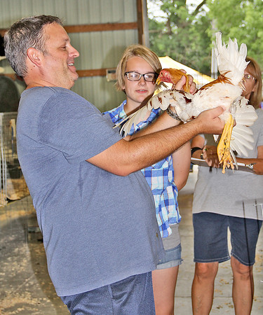 POULTRY JUDGING: Poultry Show Judge Matt McCammon, a poultry breeder from Green County, examines a bird at the show Tuesday.