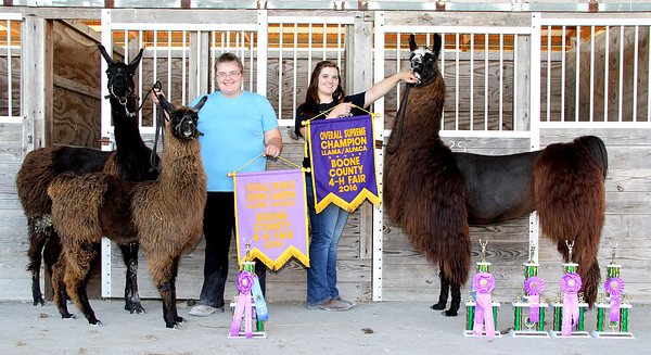 Big Day: Kelsee Robinson (right) poses with her llama after winning the overall supreme chamion award for the 2016 Boone County 4-H Fair llama/alpaca show. Ellie Garst finished as the reserve supreme champion.