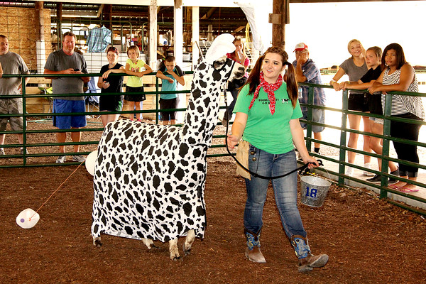 Moo Moo: Kelsee Robinson shows off her llama during the coustume portion of the Boone County 4-H Fair llama/alpaca show. Robinsin placed as the reserve grand champion of the coustume contest.