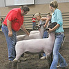 SHEEP JUDGING: Sheep Show judge Mike Crowder, a sheep breeder and auctioneer, examines rams on Sunday.