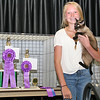 Elizabeth Pearl | The Lebanon Reporter<br /> <br /> CAT'S ME-WOW: Emerson Haines with best of show champion Maggie. Maggie is a Siamese Seal Point and a first time overall winner.