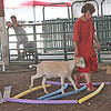 GOAT AGILITY: 4-Her Nick Gillihan leads his goat around an obstacle course Sunday at the Boone County 4-H Fair Utility Goat Show.