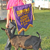 SUPREME CHAMPION: Sidney Brown was the supreme champion at the Boone County 4-H Fair Utility Goat Show. She is pictured here with her goat Tonks.