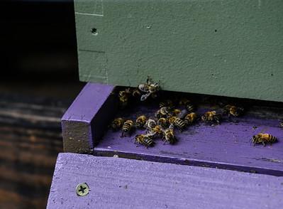 Keeping bees - 082018
