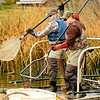 Steven Mattocks, left, and Paul Hladick catch koi fish that have been electroshocked at Thunderbird Lake in Admiral Arleigh A. Burke Park, where Colorado Parks and Wildlife staff attempt to remove a population of koi fish in Boulder on Monday Nov. 19, 2012. DAILY CAMERA/ JESSICA CUNEO.