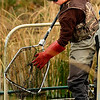 Paul Hladick catches koi fish at Thunderbird Lake in Admiral Arleigh A. Burke Park where Colorado Parks and Wildlife staff attempt to remove a population of koi fish in Boulder on Monday Nov. 19, 2012. DAILY CAMERA/ JESSICA CUNEO.
