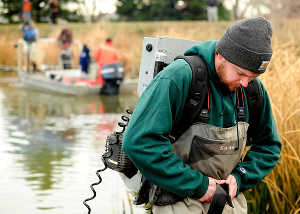 Andy Kvien straps on a backpack that electroshocks fish without killing them at Thunderbird Lake in Admiral Arleigh A. Burke Park where Colorado Parks and Wildlife staff attempt to remove a population of koi fish in Boulder on Monday Nov. 19, 2012. DAILY CAMERA/ JESSICA CUNEO.
