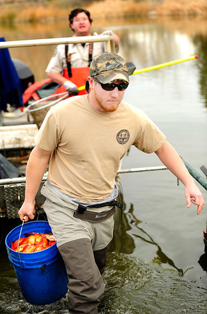 Steven Mattocks, front, carries a bucket of koi fish while Ben Swigle waits in the boat at Thunderbird Lake in Admiral Arleigh A. Burke Park, where Colorado Parks and Wildlife staff attempt to remove a population of koi fish in Boulder on Monday Nov. 19, 2012. DAILY CAMERA/ JESSICA CUNEO.