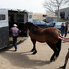 "Rubin Trinidad, left, and Jenny Baldwin, load up a horse at Autumn Hill Equestrian Center during the evacuation because of the Lefthand Canyon Fire on Friday.<br /> For a videos of the fire, go to  <a href=""http://www.dailycamera.com"">http://www.dailycamera.com</a>.<br /> Cliff Grassmick/ March 11, 2011"