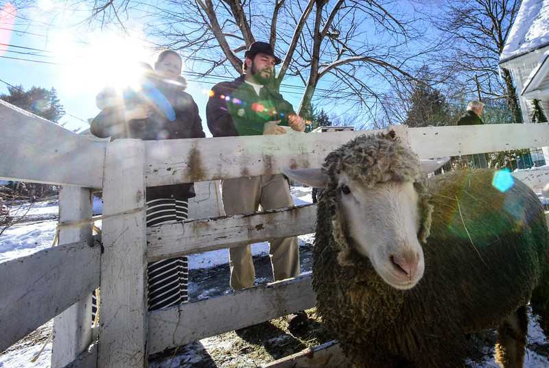 KRISTOPHER RADDER - BRATTLEBORO REFORMER<br /> The La Querre family look upon the animals during the annual living nativity scene at the  Lutheran Trinity Church on Sunday, Dec. 17, 2017.