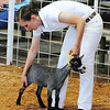Globe/T. Rob Brown<br /> Sarah Cooper, 21, of Carthage, shows a young Nigerian dwarf goat Wednesday afternoon, July 10, 2013, during the Jasper County Youth Fair. Cooper ended up taking home several blue and champion ribbons for her goats.