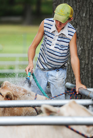 Globe/T. Rob Brown<br /> Eli Meyer, 12, of Sarcoxie, stands atop part of a fence to get a better angle for washing a heifer Wednesday, July 10, 2013, during the Jasper County Youth Fair.