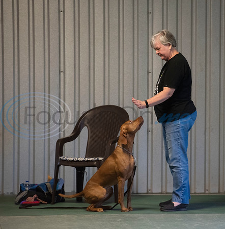 Cheryl Etheridge of Lindale plays a touch game with her dog Rocky during the Fun & Games class at Lucky Dog Training Center, 15545 County Road 1134 in Tyler on Tuesday, July 7, 2020.  The once a week class focuses on training fun tricks and useful behaviors to develop a strong dog and handler bond. Dogs in this class have had basic obedience training, and many participate in agility training and competitions.