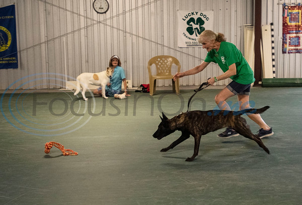 Instructor Robin Visniski and dog Nemesis demonstrate the race to the toy game during the Fun & Games class at Lucky Dog Training Center, 15545 County Road 1134 in Tyler on Tuesday, July 7, 2020.  The once a week class focuses on training fun tricks and useful behaviors to develop a strong dog and handler bond. Dogs in this class have had basic obedience training, and many participate in agility training and competitions.