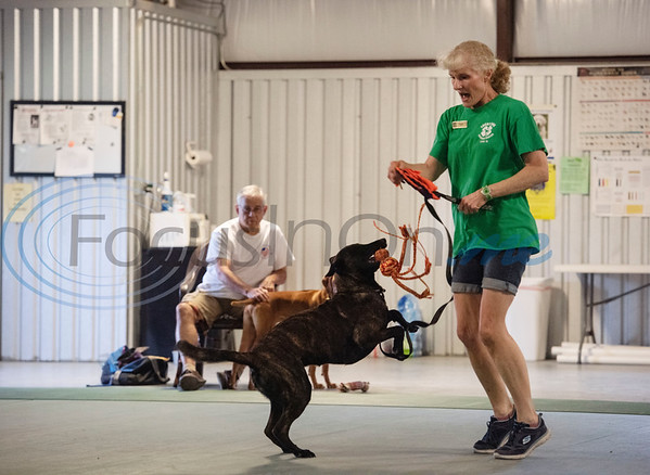 Instructor Robin Visniski and dog Nemesis demonstrate the two toy game during the Fun & Games class at Lucky Dog Training Center, 15545 County Road 1134 in Tyler on Tuesday, July 7, 2020.  The once a week class focuses on training fun tricks and useful behaviors to develop a strong dog and handler bond. Dogs in this class have had basic obedience training, and many participate in agility training and competitions.