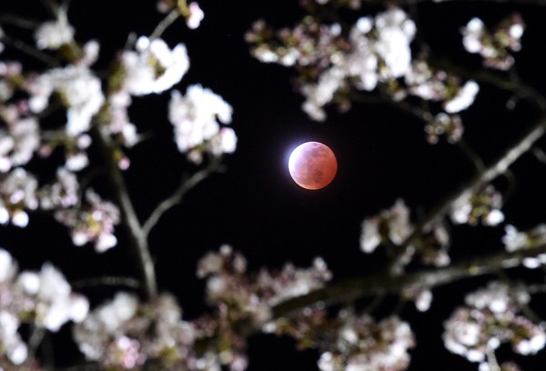 Japan Lunar Eclipse