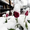 MAY 1 2013 SNOW