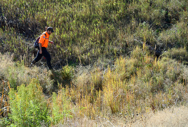 A searcher works a low grassy area near McCaslin and Coalton Road while looking for sign of Jessica Ridgeway in Superior, Colorado October 8, 2012. BOULDER DAILY CAMERA/ Mark Leffingwell