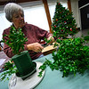 KRISTOPHER RADDER — BRATTLEBORO REFORMER<br /> Becky Cameron creates a stunning boxwood tree display on Tuesday, Nov. 27, 2018, for the annual Holiday Bazaar at the All Souls Church Unitarian Universalist starting on Friday.