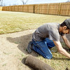 Globe/T. Rob Brown<br /> ADP Landscape, of Cassville, sod crew member James Dean lays sod Wednesday morning, March 7, 2012, at a home near the intersection of 26th Street and Ogden Lane in Duquesne.