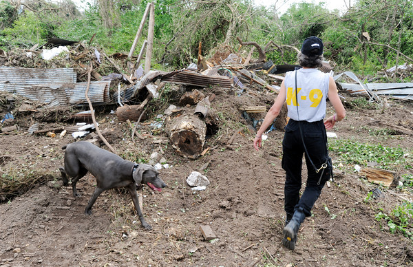 Globe/T. Rob Brown<br /> Jewel, a Weimaraner (German bird dog) cross-trained search & rescue and cadaver dog, heads into the woods east of Cunningham Park Tuesday afternoon, May 31, 2011, in search of any bodies between 20th and 15th streets in Joplin. Jewel's handler is Carrie Grove, dispatcher for the Missouri Search & Rescue K-9 of Kansas City, Mo.